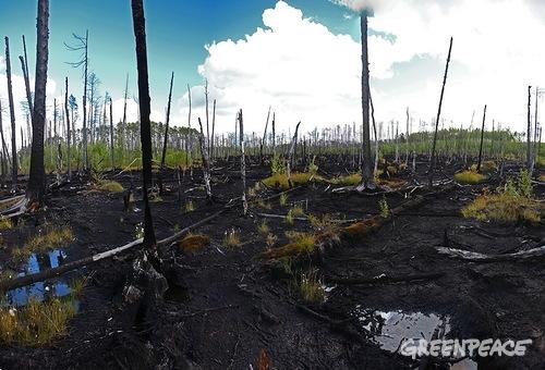 Лукойл Роснефть экология ущерб загрязнения Гринпис