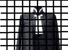 Пострадавшие от судебного рейдерства готовят Елене Хахалевой путь «арестантки без мантии» Светланы Мартыновой